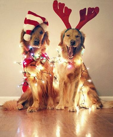 it s the most wonderful time of the year animals pinterest