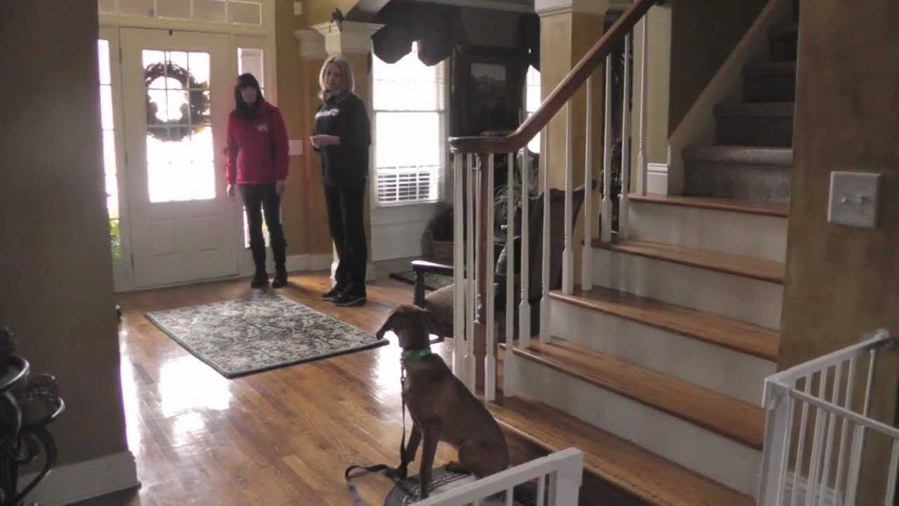 Dog training how to train a vizsla to come sit heel