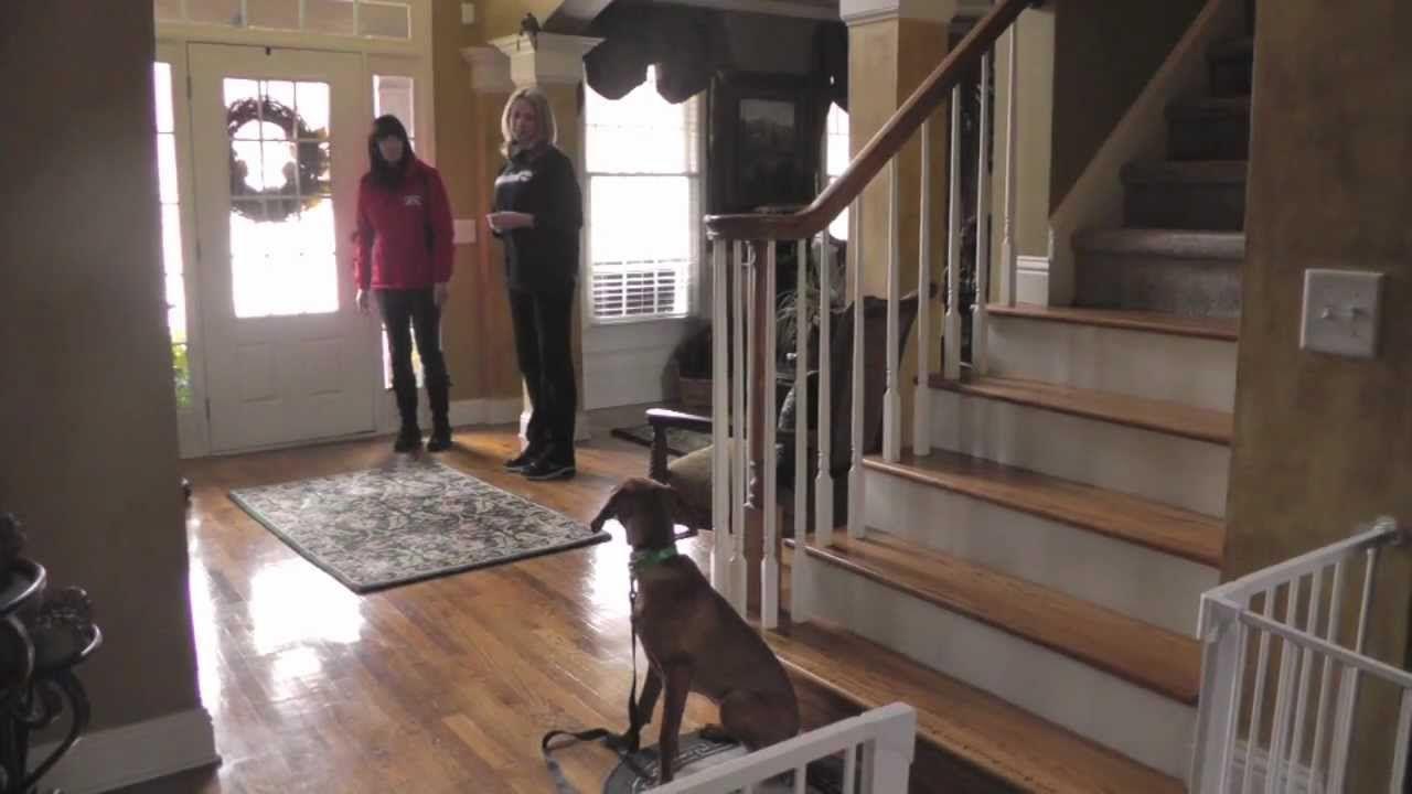 how to train a dog to walk on a leash youtube