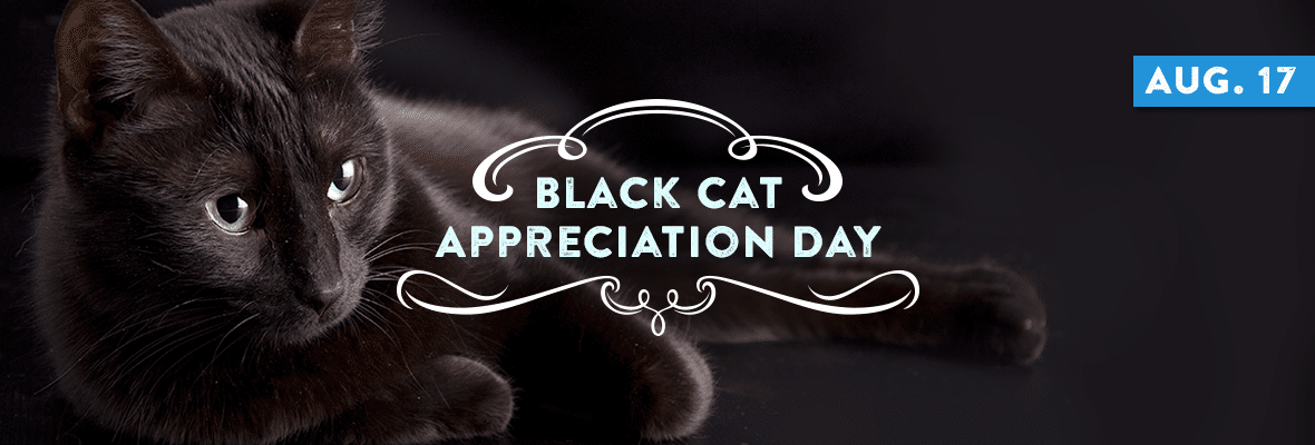National Black Cat Appreciation Day August 17 2020 National Today Black Cat Appreciation Day Black Cat National Cat Day