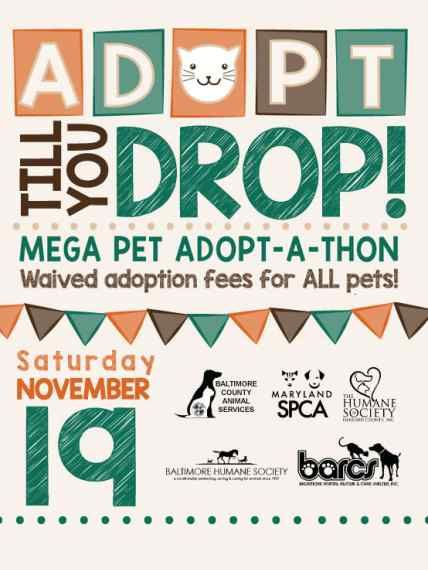 Pin by Generation Wags/A ReLove Anima on Adoption Events