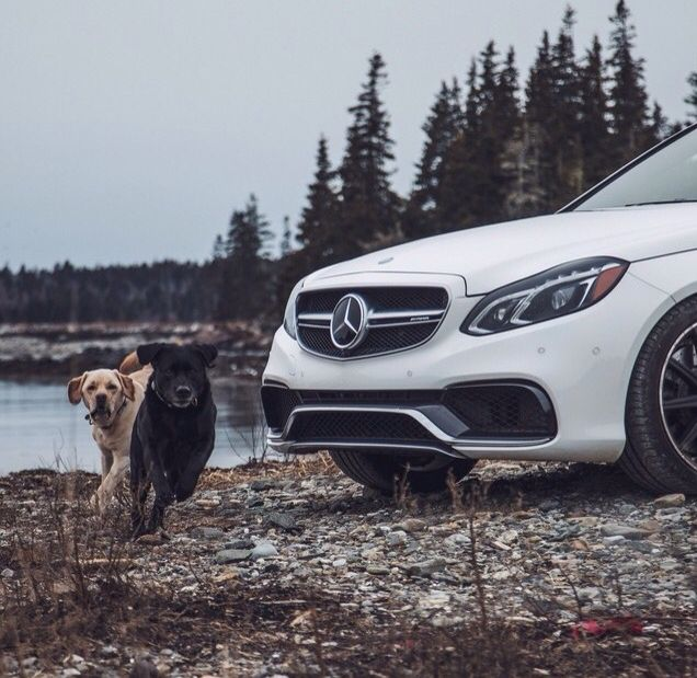 #dogs #pets #mercedez