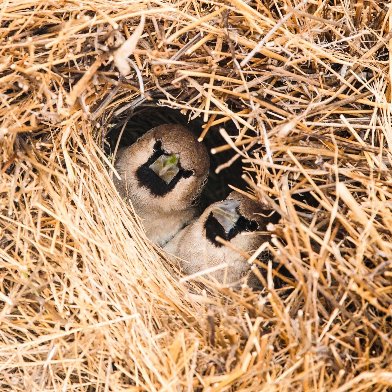 Photograph Sociable Weavers Nest by Denis Roschlau  on 500px