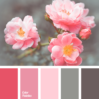 Bright Pink Brown And Gray Color Of Rose Tea