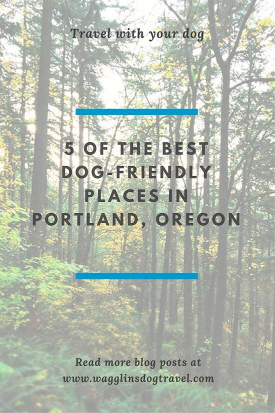 5 of the Best Dog-Friendly Places in Portland, Oregon   Pets