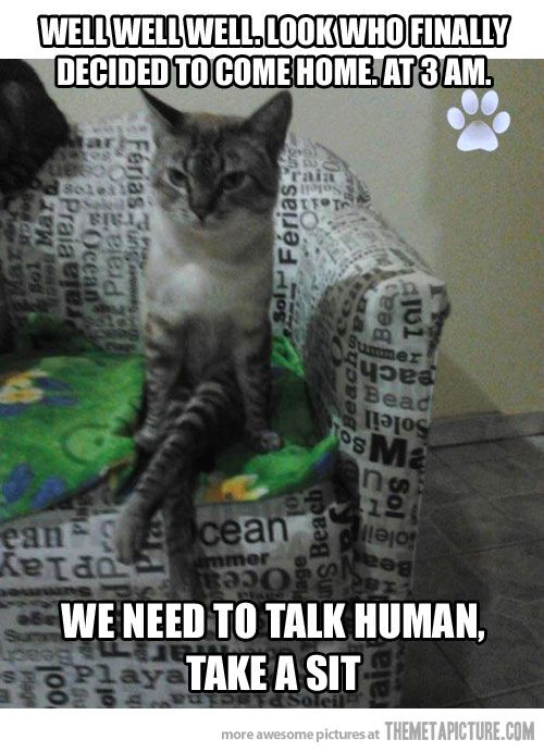 funny cat sitting down like human | Cats(tumblr and memes ...