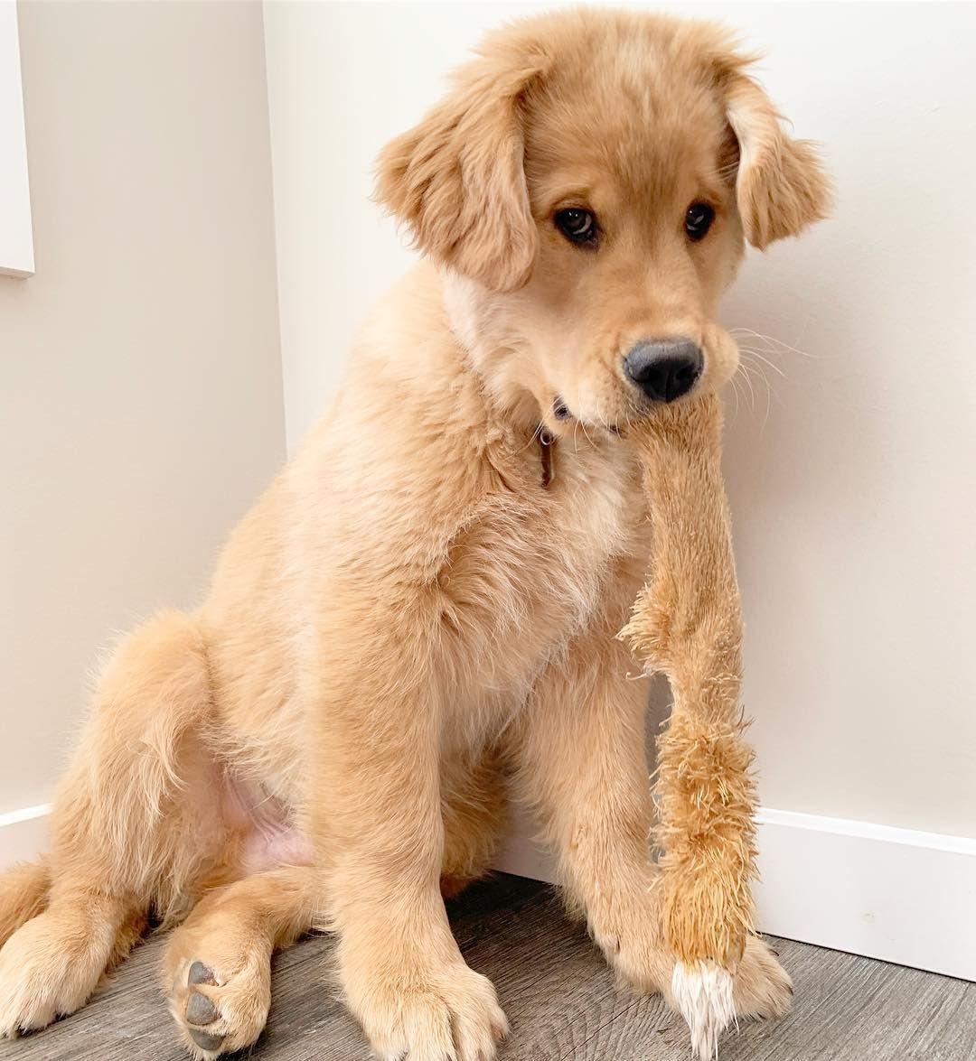 Rudy Puppy Dog Eyes Cute Animals