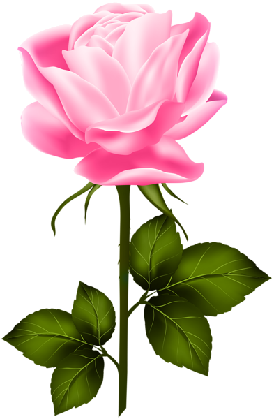 Pink Rose With Stem Png Clip Art Flower Clipart Rose Flower Png Flower Drawing