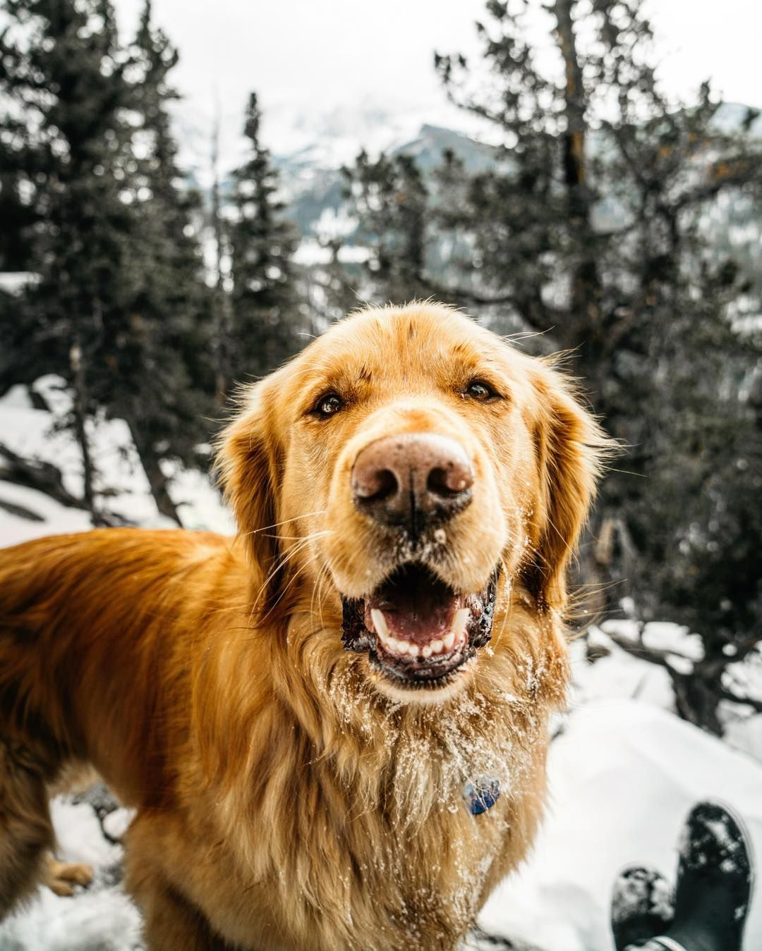 Aspen The Mountain Pup On Instagram Winter Hikes Come With Its
