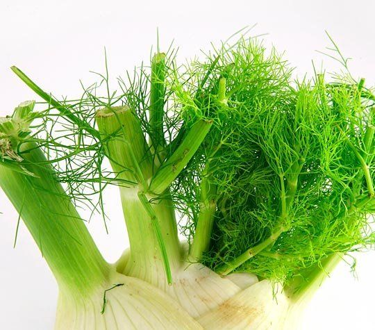 how to use the fennel plant