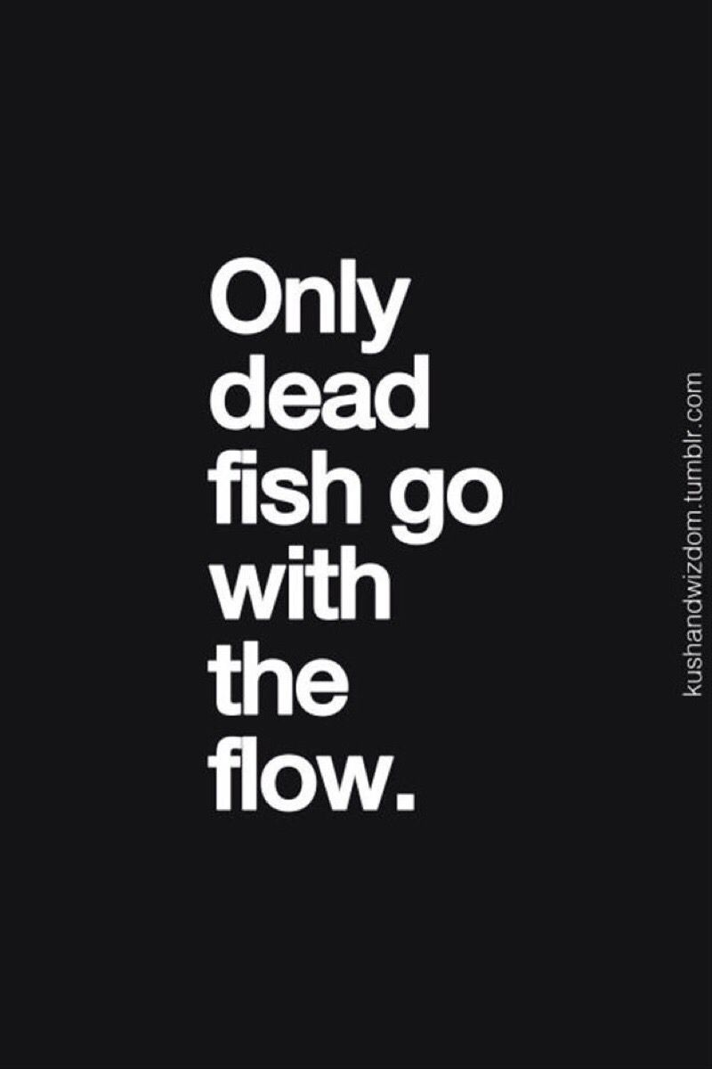 Go With The Flow Quotes Quote Only Dead Fish Go With The Flow  Quotes  Pinterest