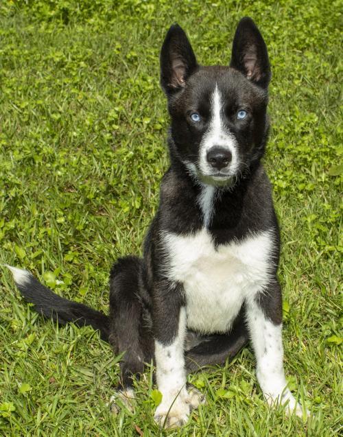 Dog Adoption Finding Your Perfect Pup Happy Oodles Dog Adoption Dog Love Dog Background