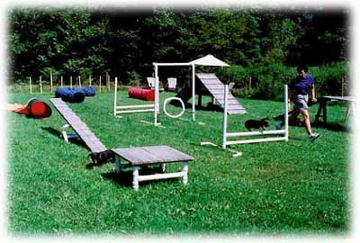 Backyard dog agility on pinterest dog playground dog agility and dogs