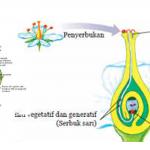 Proses Penyerbukan Pada Bunga Menurut Ahli Biologi Bunga Biologi Gambar