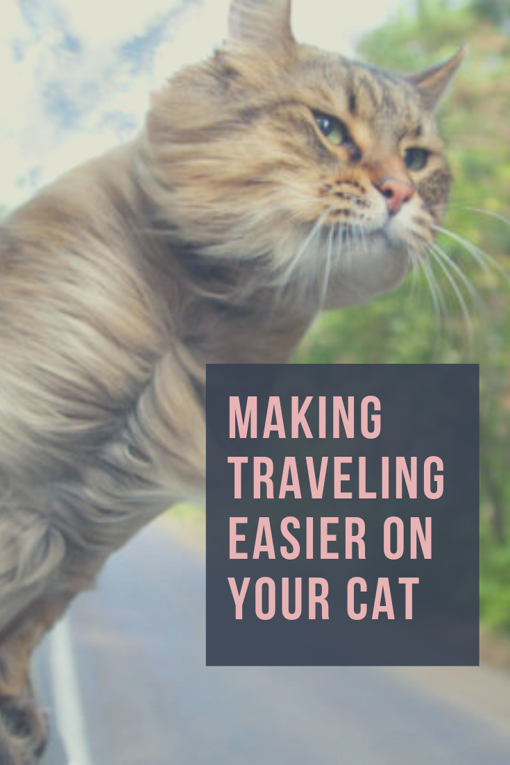 How To Make A Vacation Tour With Your Cat Less Stressful Cats Cat Travel Teacup Cats