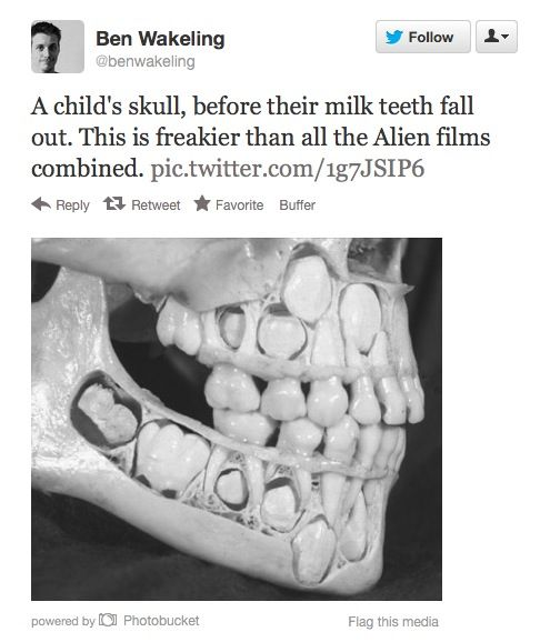 How Does This Make You Feel Trypophobia Childs Skull The