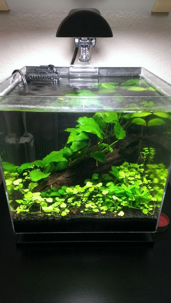 3 Gallon Bedside Shrimp Tank Shrimp Tank Aquarium Fish Tank Betta Fish Tank
