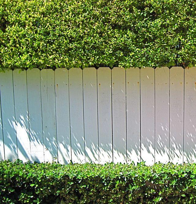 Crea un seto divisorio entre tu casa y la del vecino for Barda de madera para jardin