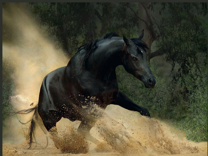 View All Images At أجمل خيول العالم صور Folder Horses Beautiful Horses Photography Horse Photos
