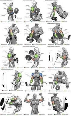Chest Shoulders Triceps Illustrated Exercise Plan