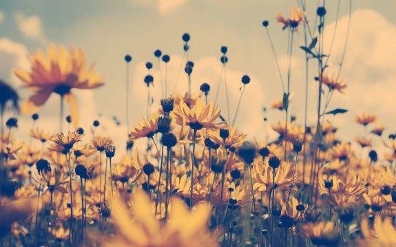 Wildflowers Desktop Wallpaper Flower Backgrounds Vintage Flowers Flower Wallpaper