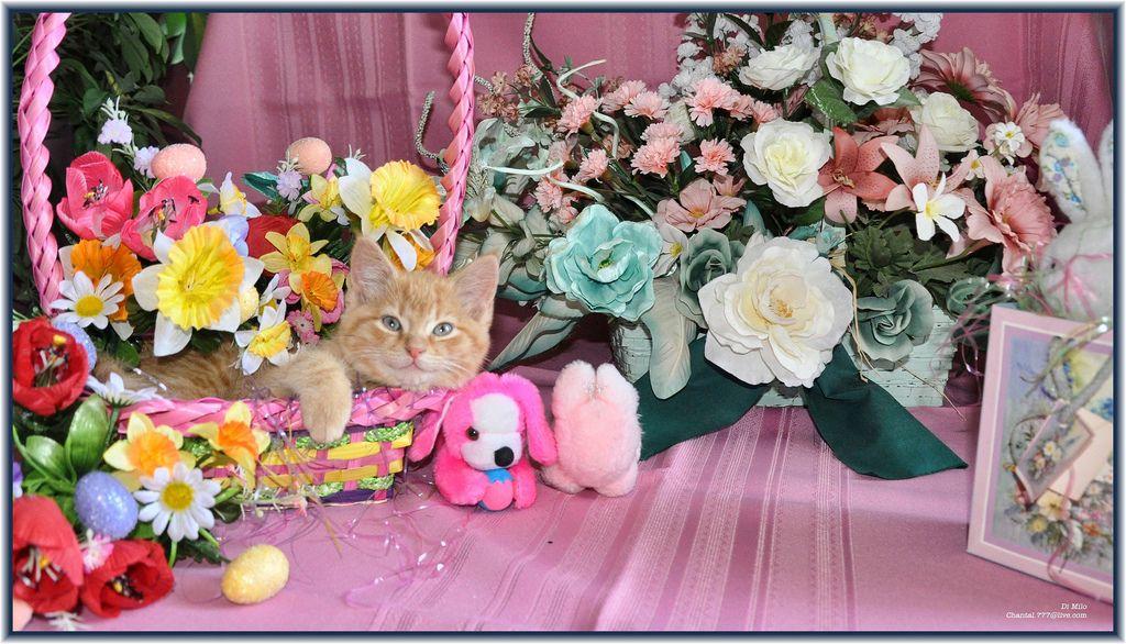 Cute Easter Kitty Cat Kitten in Home Garden Art Decor with Easter ...
