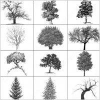 Landscape Architecture Plan Trees landscape architecture classic graphic symbols    tree