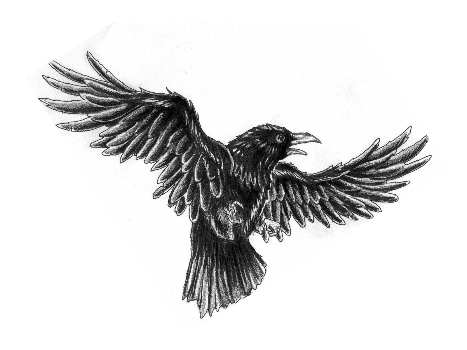 ff98935816193 Crow Tattoo Sketch - Tattoo Ideas | beautiful tattoos | Black crow ...