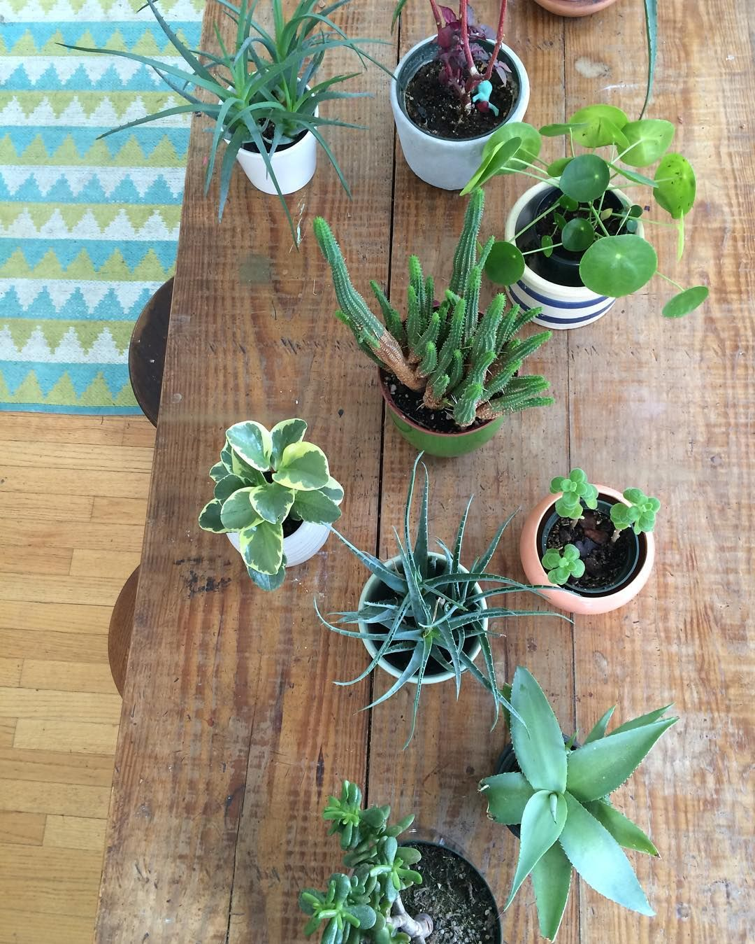 home | dining table with plants