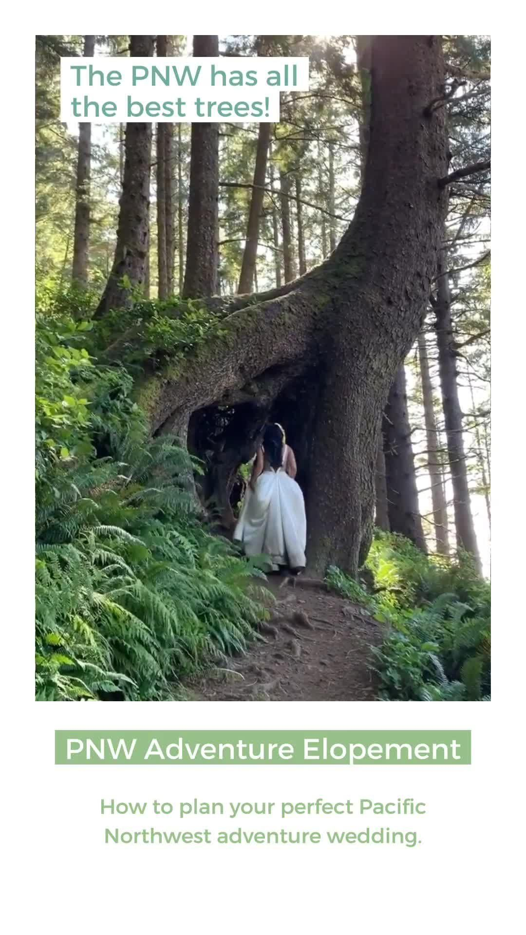 Pin On Oregon Elopements And Intimate Weddings