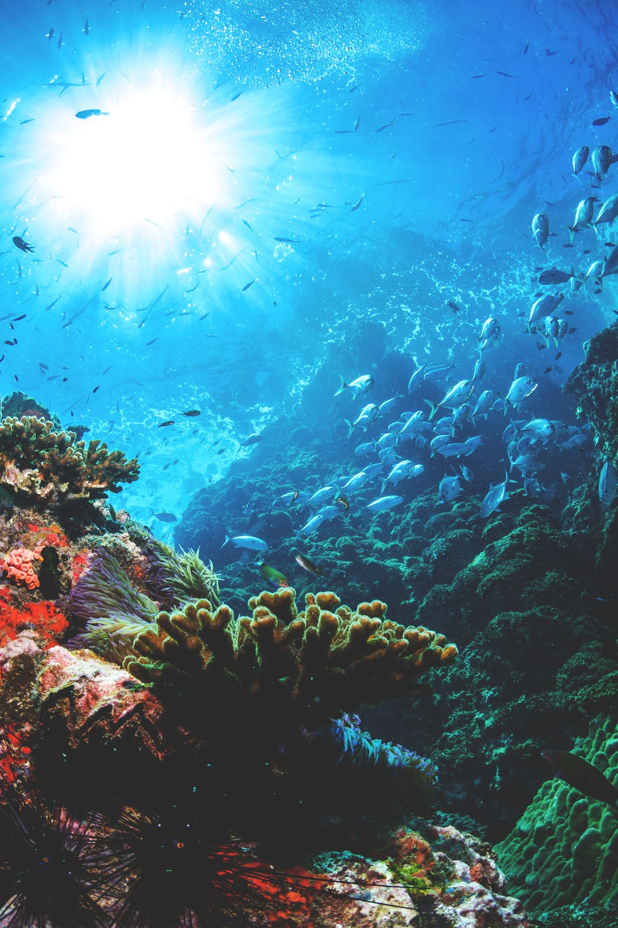wavemotions Stairway … ! Underwater photography ocean