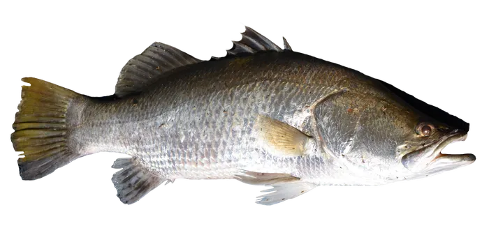 Fish Transparent Png Image Free 6 Free Pik Psd Fish Png Images Png
