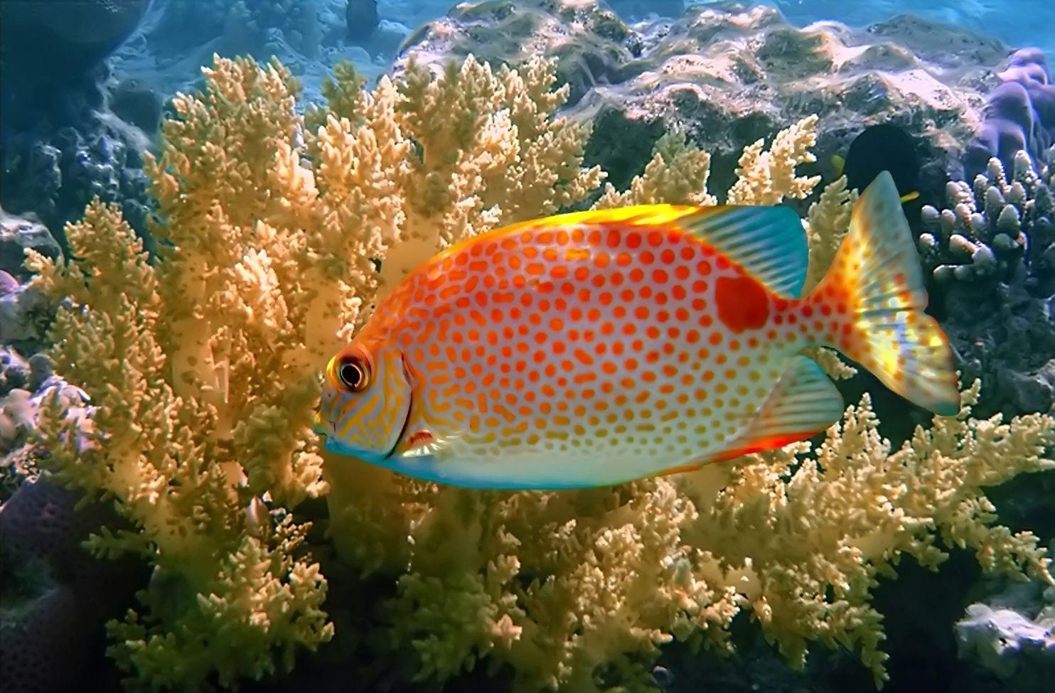 Fotografías Del Fondo Marino Peces De Colores Arrecifes Y Corales En Los Oceanos Peces De Colores Fondo Marino Peces