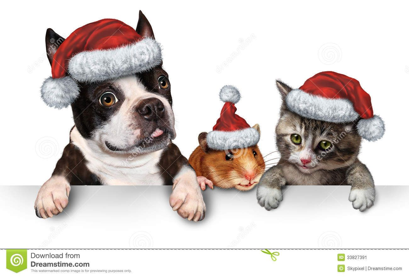 Christmas Cats And Dogs Pet christmas pictures, Pet