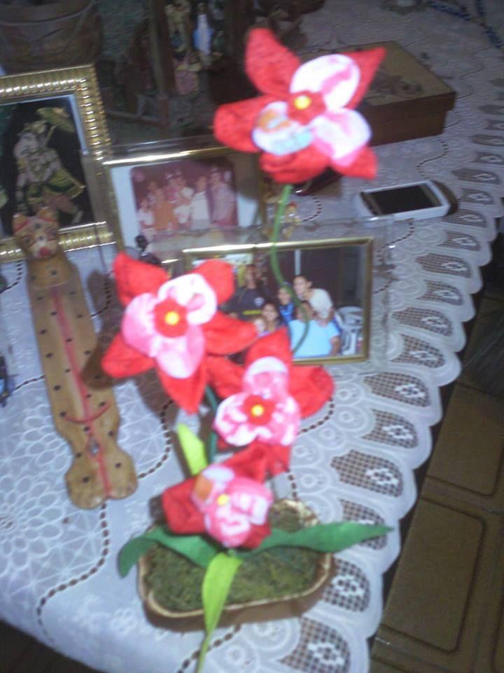 Orquídeas de fuxico.