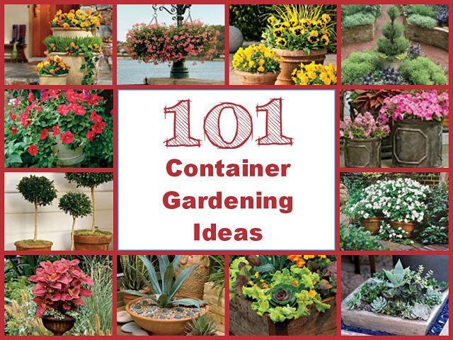 101 container gardening ideas gardening pinterest container