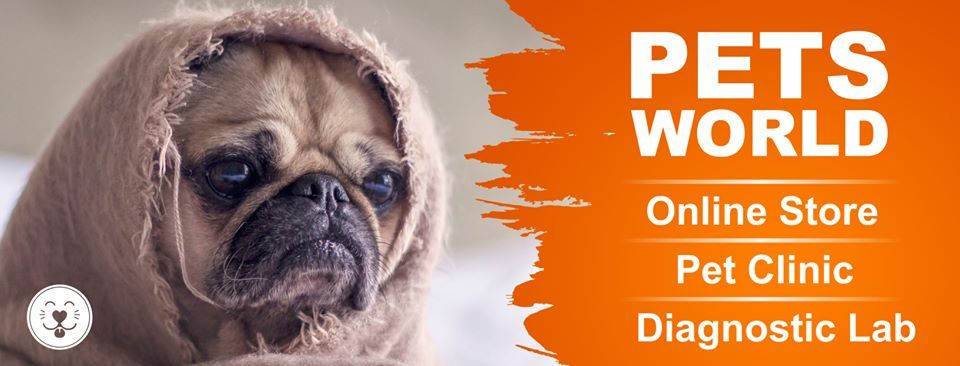 Petsworld Provides Best Veterinary Clinic Services In Lahore Pet