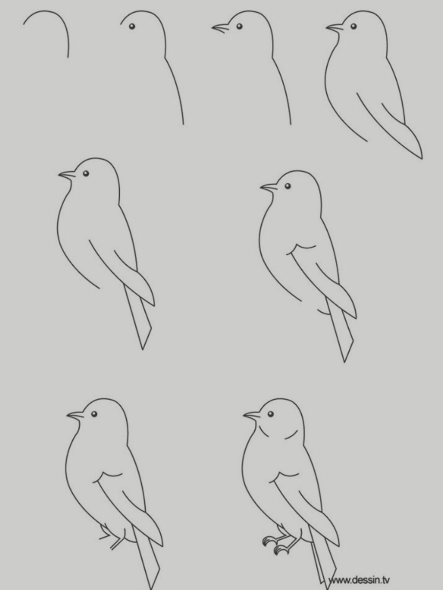 Step By Step How To Draw A Bird