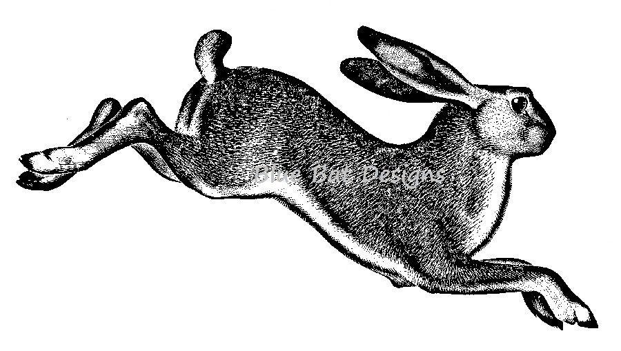 Бегущий заяц рисунок