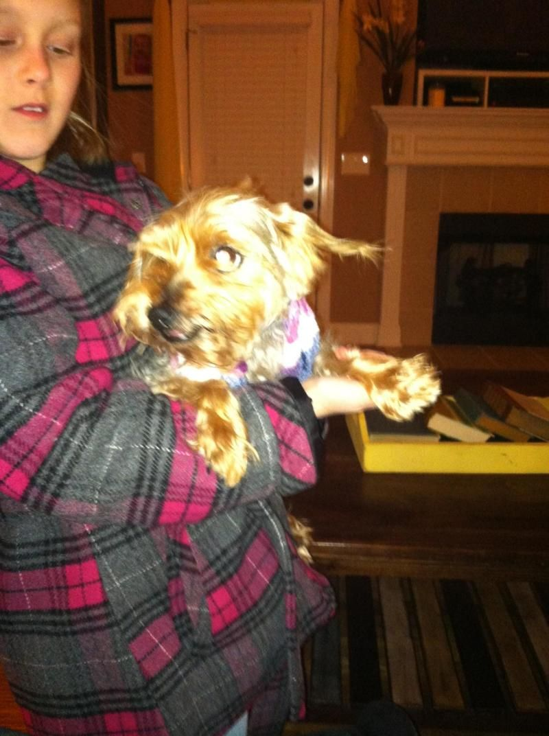 Hello! My name is Honey and I am a 4 year old Yorkie. I am