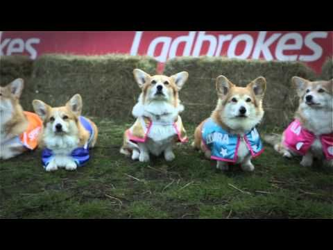 Stop Everything And Watch Corgis Race To Pick Royal Baby S Name