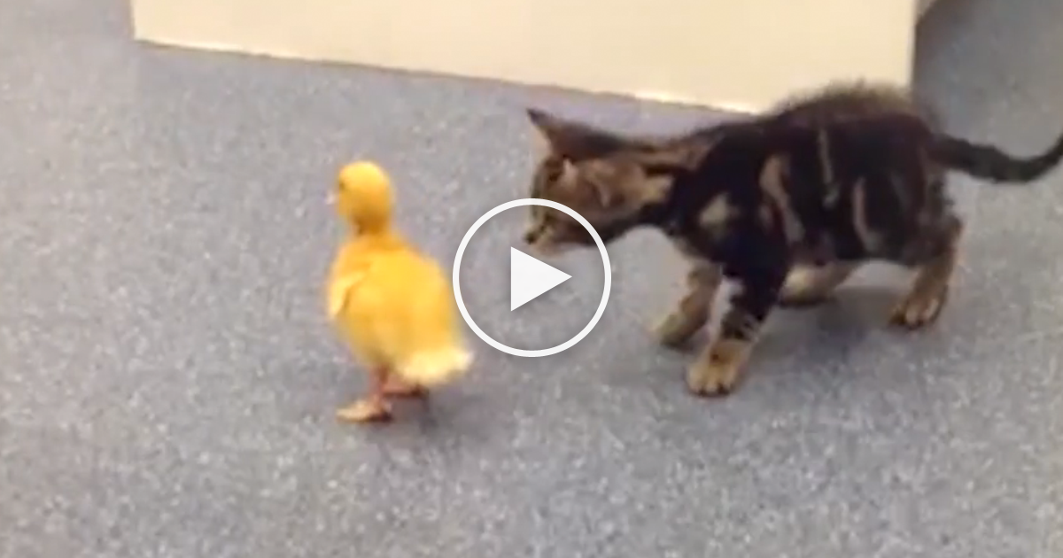These Kittens Learn Things For The First Time And It S Just Adorable Must Watch Kittens Cutest Kittens Curious Cat