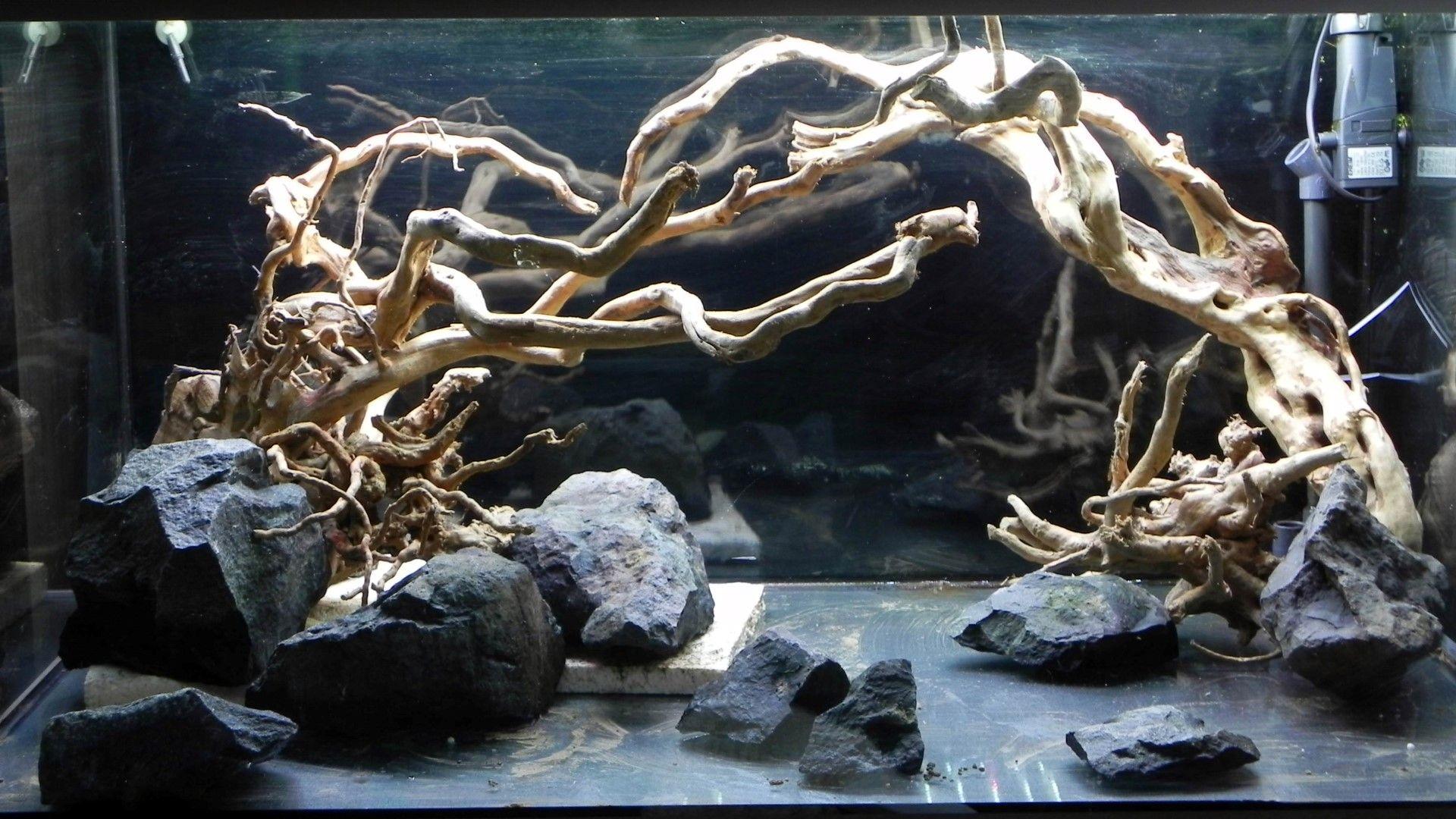 Bildergebnis Fur Dschungel Aquascape Aquarium Steine Aquascaping Aquarium