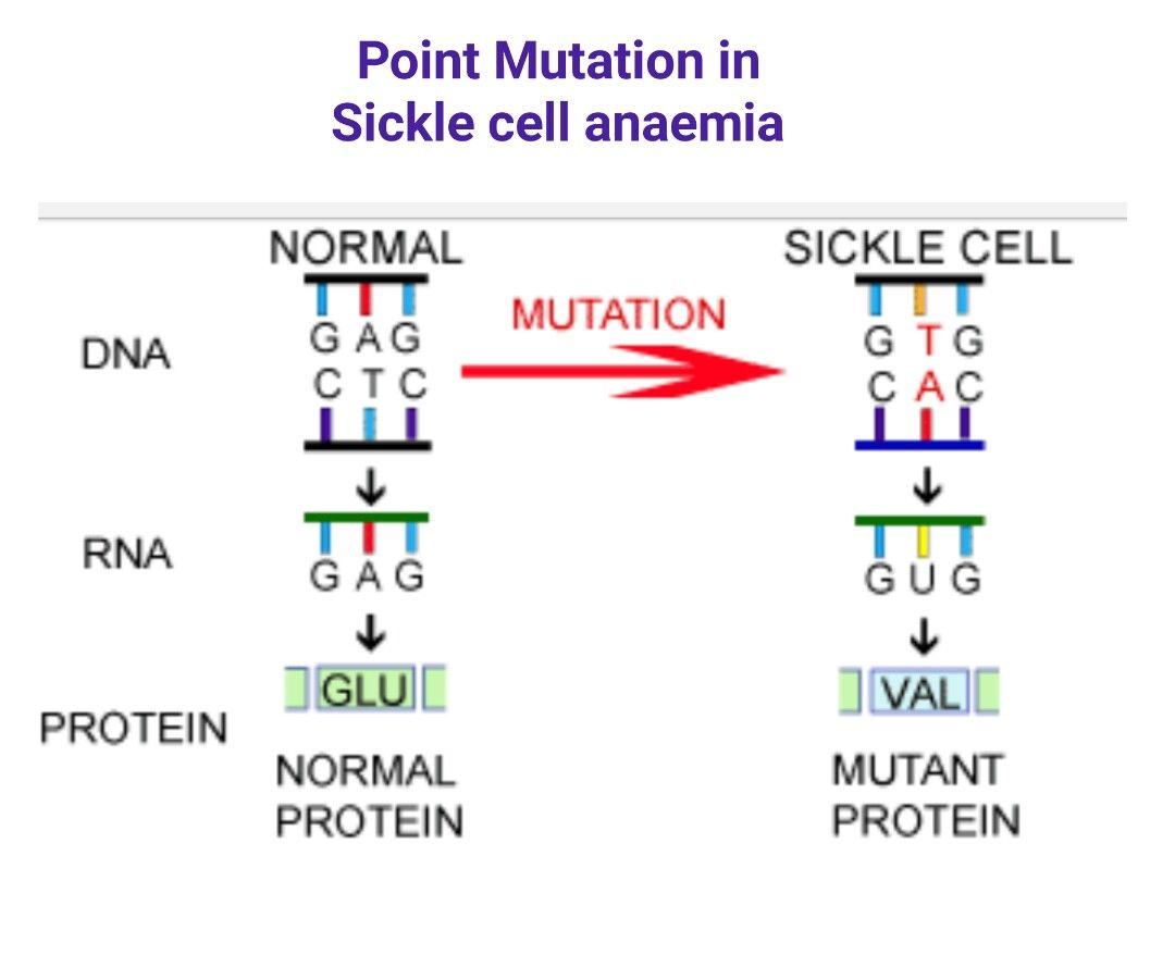 Point Mutation In Sickle Cell Anaemia
