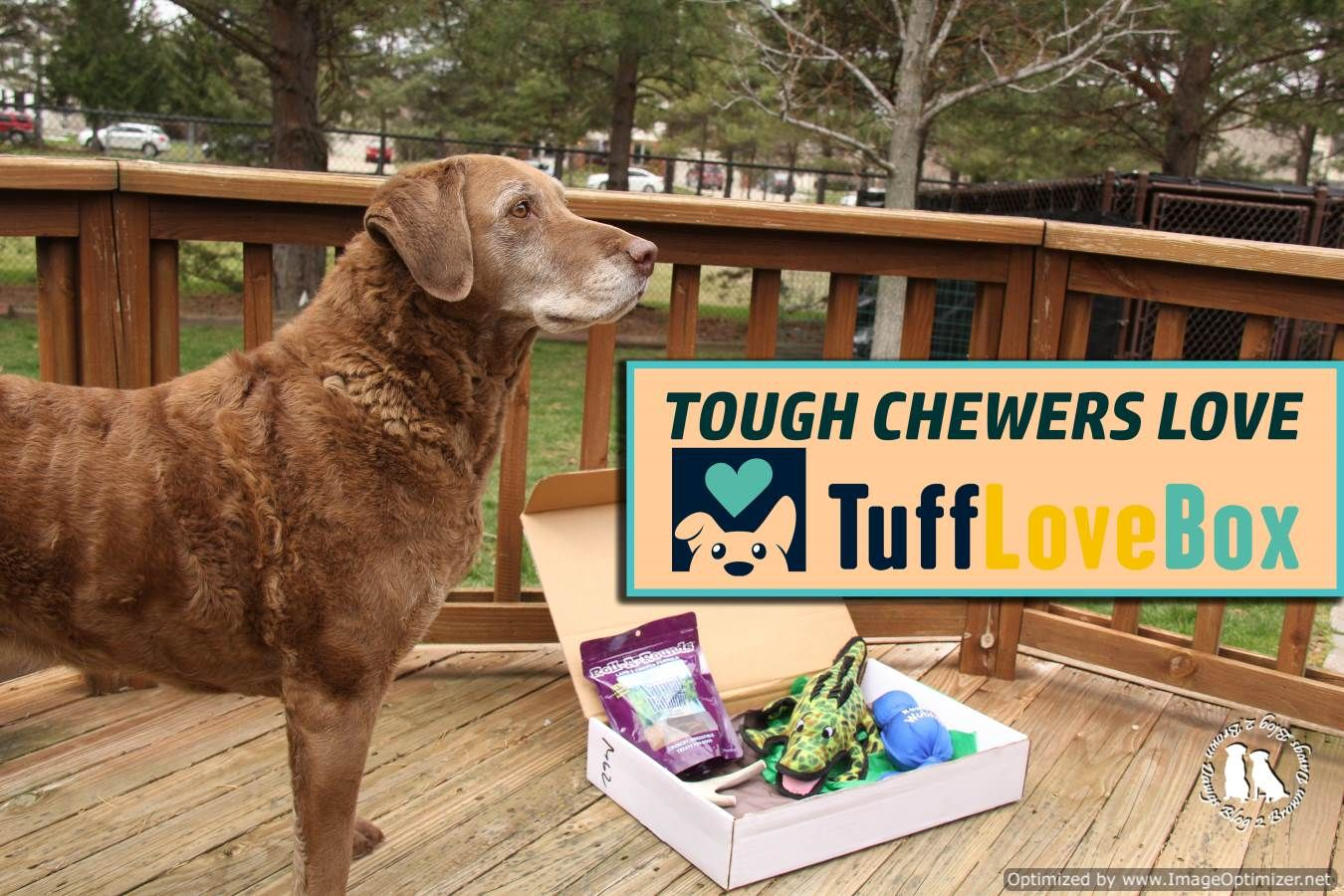 We Are Reviewing Tufflovebox Which Is A Monthly Subscription Box