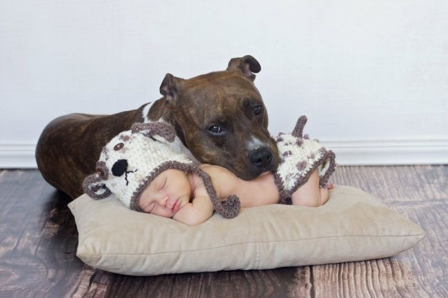 http://www.boreddaddy.com/25-heart-melting-photos-proving-that-babies-really-need-pets/