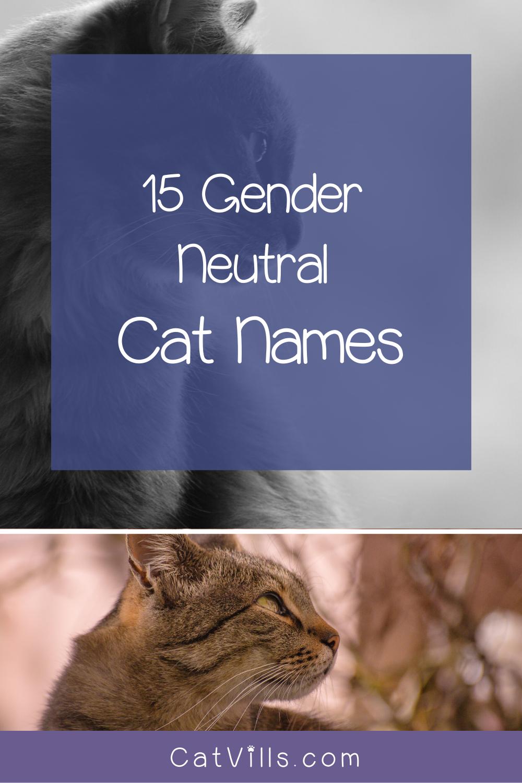 15 Unique Adorable Unisex Cat Names Catvills In 2020 Cat Names Cats Pets Cats