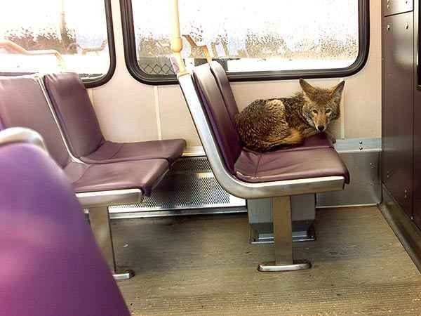 Maybe you met an unlikely companion on the train…