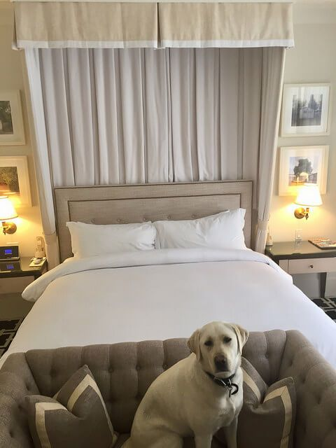 Pet Friendly Hotel Room, King Bed, Garden Court Hotel, Palo Alto, California  Boutique Hotel