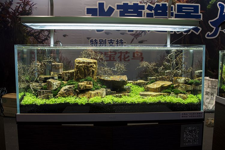 Another completed scape in the live aquascaping demonstration